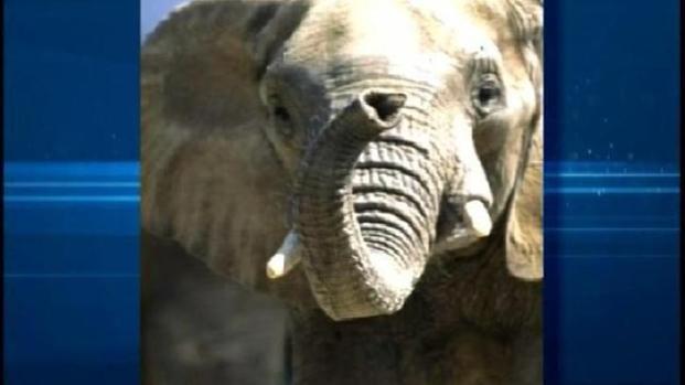 [DGO] Elephant Dies at San Diego Zoo Safari Park