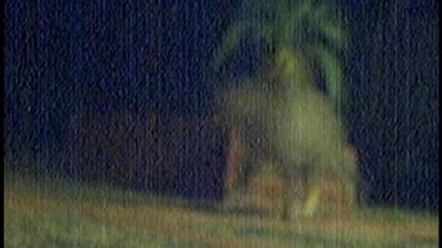 [DGO] Escondido Homeowner Captures Mountain Lion on Security Camera