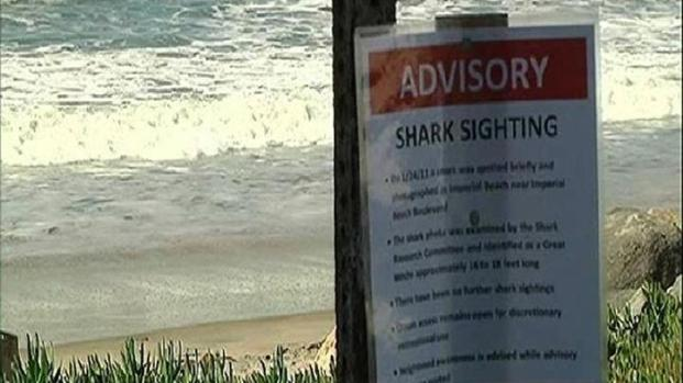 [DGO] Great White Shark Spotted in Imperial Beach