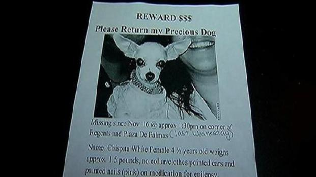 [DGO] Missing Dog Stunt May Have Led to Stalker