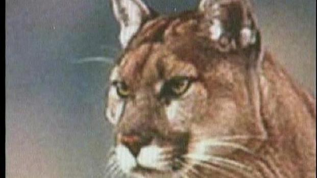 [DGO] Mountain Lion Reported in Santee