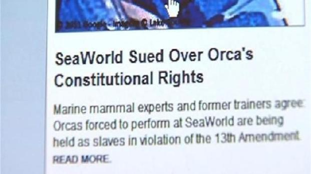 "[DGO] PETA: SeaWorld Holds Orcas as ""Slaves"""