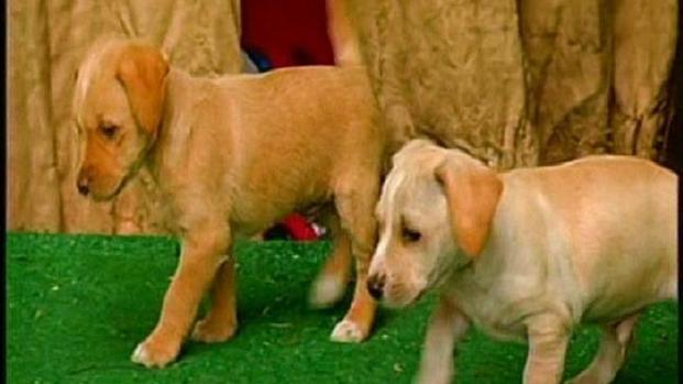 [DGO] Puppy's Mom Among 10 Dogs Poisoned