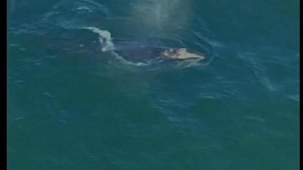 [DGO] Rare Whale Sighting Mission Beach