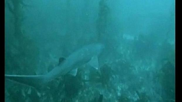 [DGO] Shark Sightings Over the Weekend?