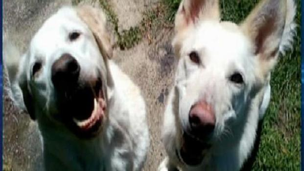 [DGO] Vet Alerted Officials in Dogs' Deadly Beating