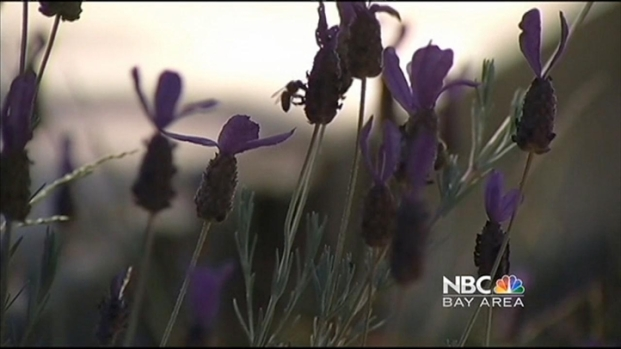 [BAY] Bee Friendly Plants Could Kill Them: Study