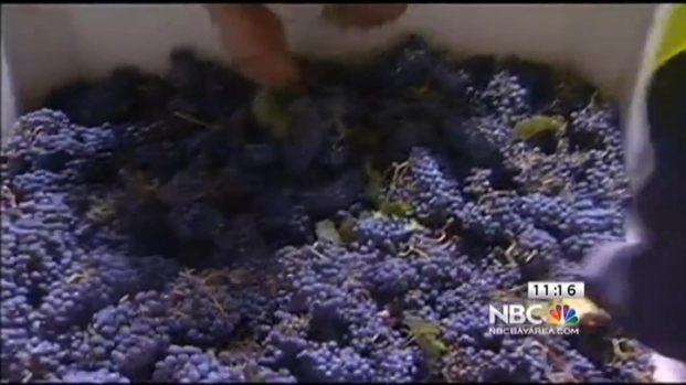 [BAY] Overnight Grape Harvest in Livermore