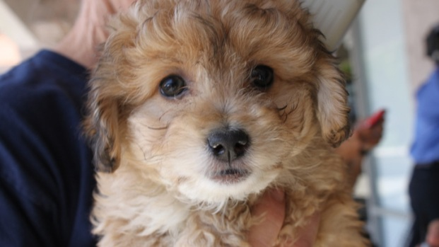 Puppies Rescued From SD Pet Stores