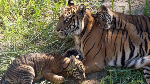 [G] Happy Mother's Day: Doting Zoo Moms