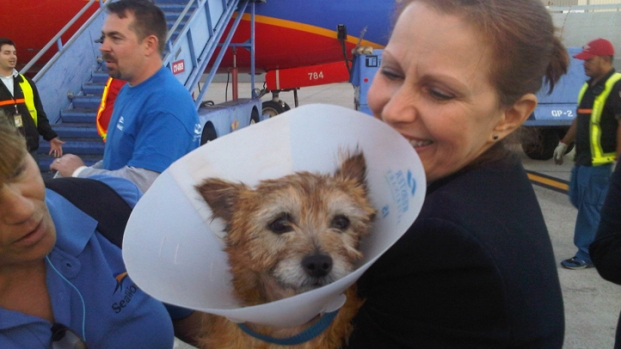 [DGO] Displaced Sandy Pets Arrive in San Diego