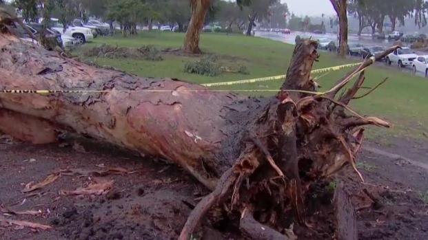 [DGO] Storm Knocks Down Trees Across San Diego