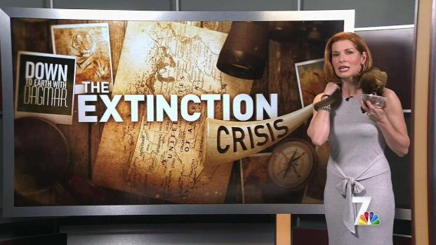 The Extinction Crisis: Animals Can't Help Themselves