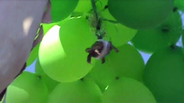 Turtle Taped to Balloons in Oceanside: Images