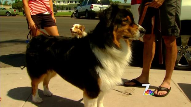 [DGO] Pet Owners Receive Emotional Distress Compensation