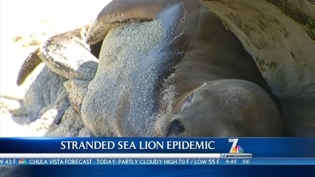 [DGO] Sea Lion Strandings Increase