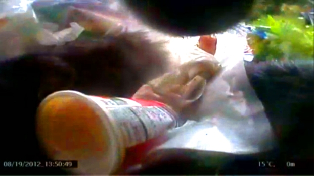 [AP] RAW VIDEO: Bears' Eye-view of Alaska