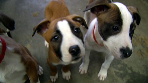 [LA] 64 Animals Disappear From Animal Shelters