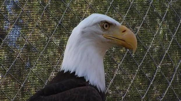 [LA] Visiting the Eagles on Catalina Island