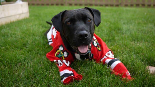 Hawks Pride: Pets Love Blackhawks