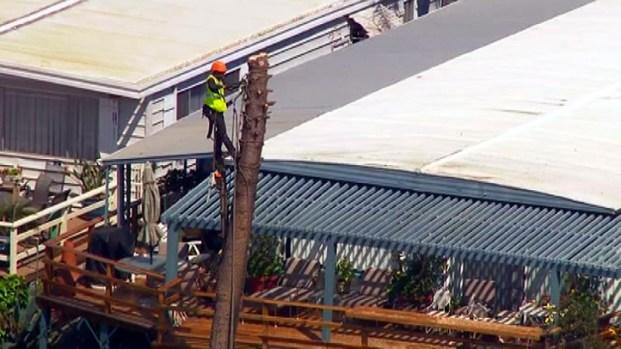 [LA] Crews Remove Tree After PCH Landslide