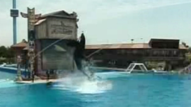 [DGO] Animal Activists Protest Orca Injuries