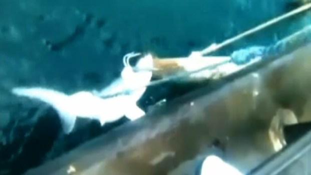 [LA] Fisherman Captures Great White Shark