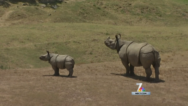 Rhinos Facing Dangerous Times