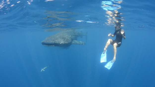 Whale Sharks, Lion Fish, Oh My! Ashley gets Intimate with Cancun's impressive Marine Life