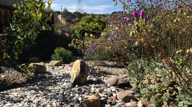 Couple's Drought-Friendly Yard Wins Big