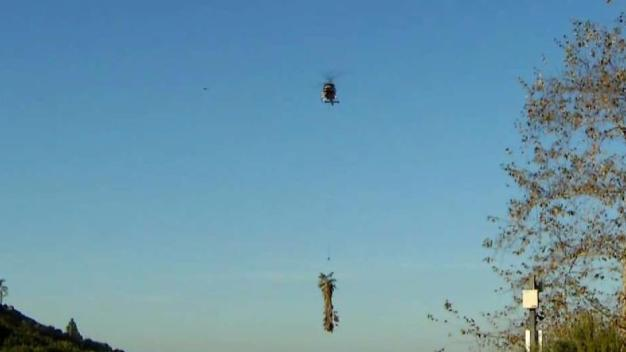 Choppers Remove 1,000-Pound Palm Trees in Chula Vista