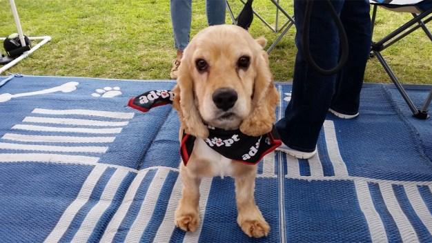 8th Annual Doggie Street Festival