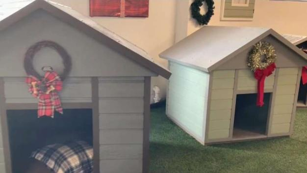 Down to Earth: Environmentally-Friendly Dog Houses
