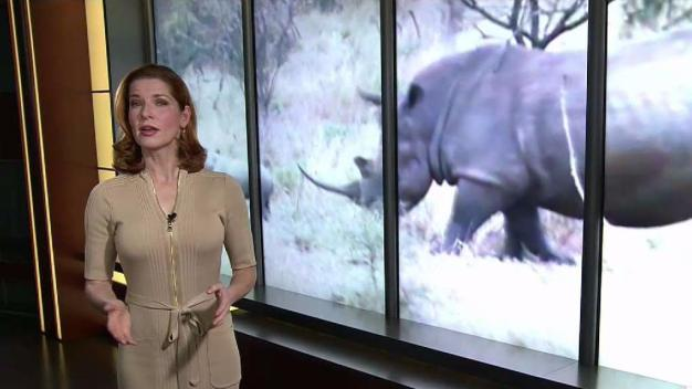 Down to Earth With Dagmar: The Extinction Crisis Part 2