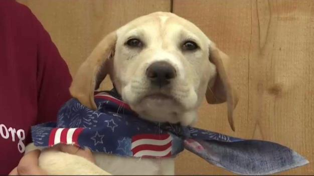 Adoption Fees Waived for Military Families at Helen Woodward Animal Center