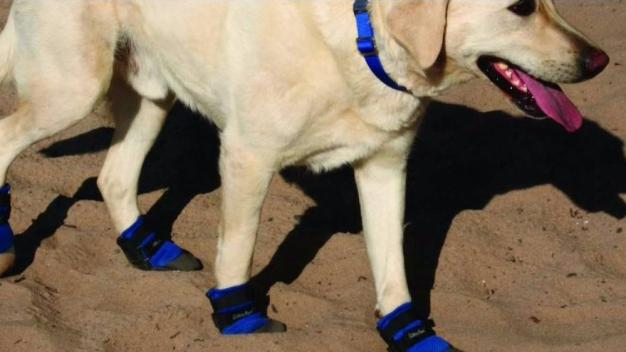 Down to Earth with Dagmar: Protecting Pet Paws from Heat