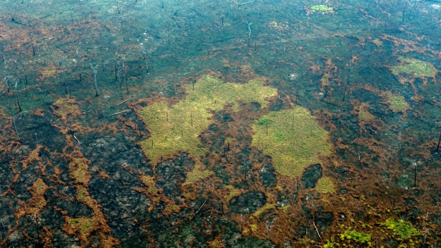As Amazon Burns, Conservationists Blame Illegal Logging