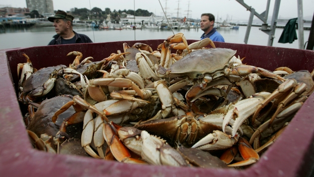 Commercial Dungeness Crab Season Along NorCal Coast Delayed