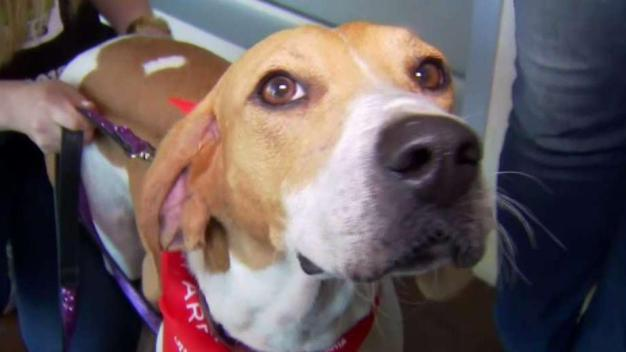 Clear the Shelters: Hundreds of SD Animals Find Homes