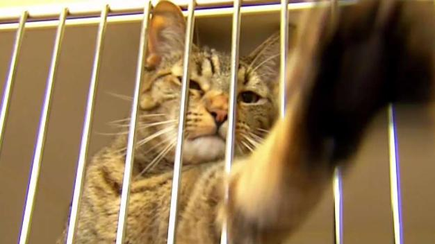 Over 700 Animals Adopted During SD Clear the Shelters Event