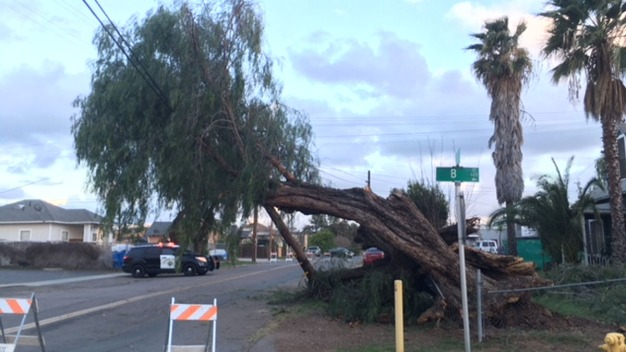 Strong Wind Knocks Down Nearly 100-Year-Old Tree in Ramona