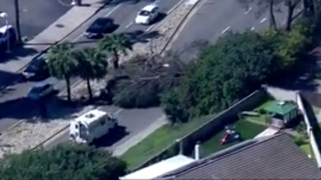 Tree Falls Near Busy Rancho Bernardo Intersection