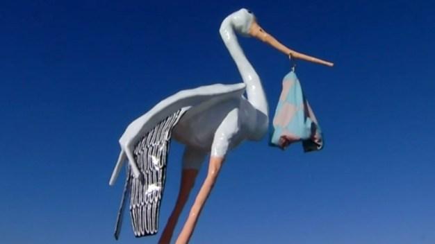 Hospital's Storm-Damaged Stork Baby Back at Perch