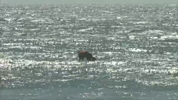 Watch: Best Waves Go to the Dogs at Surf Contest