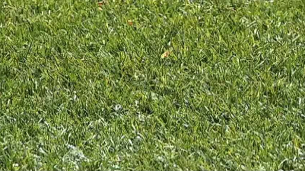 Rebates Drive Grass-Removal Frenzy in Drought