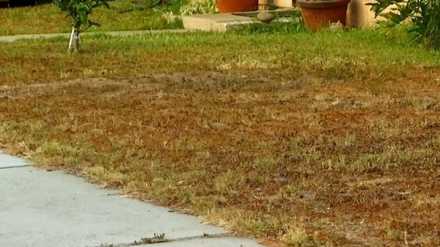 Rebates for Drought-Friendly Lawns Dry Up