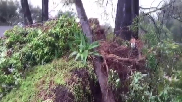 Tree Crushes Historic Home in Escondido