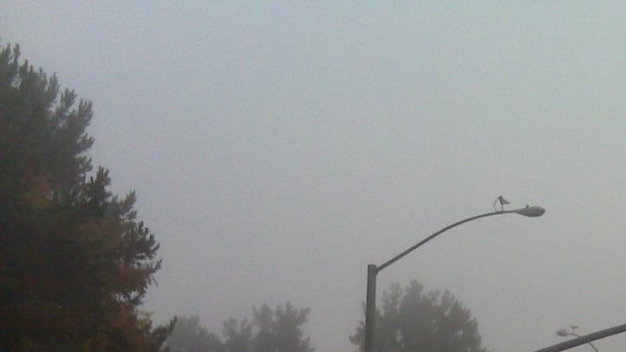 It's a Foggy Friday, San Diego!