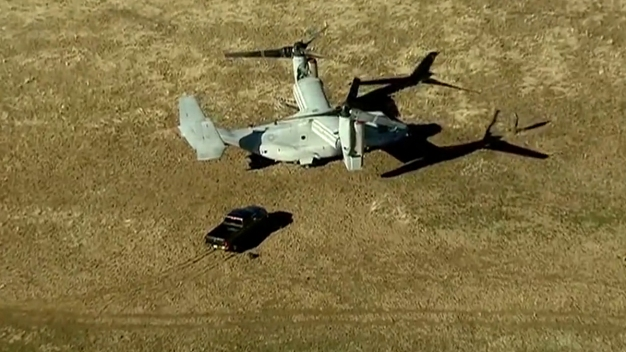 Osprey Lands in Field East of San Diego