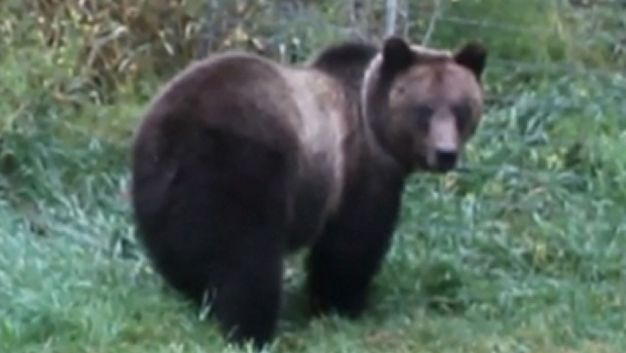 Wyoming School Says No Guns for Grizzly Bears
